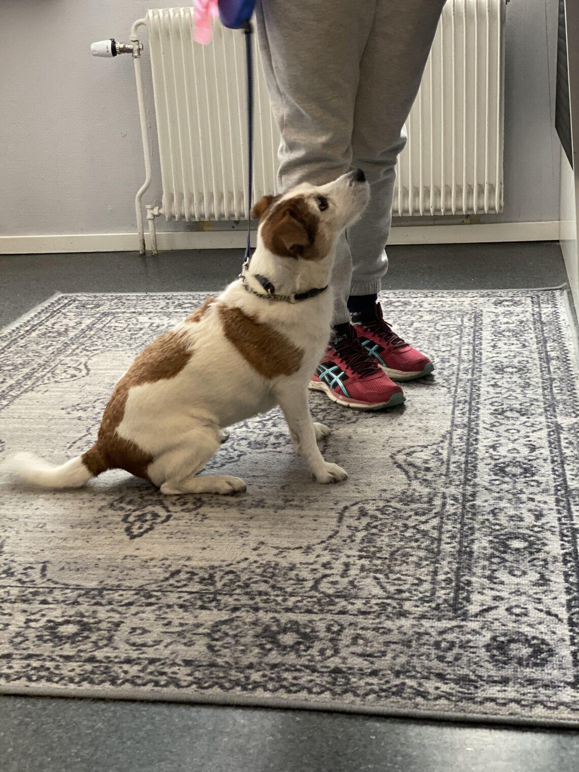 Hund checkar in på Strand City Hotell