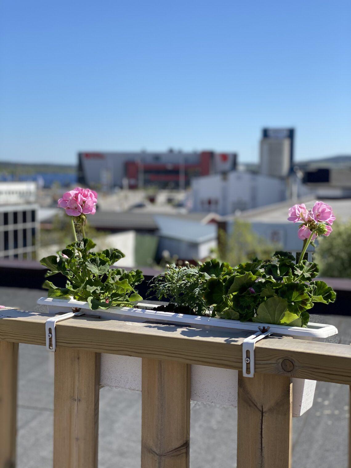 Nu har värmen kommit till Örnsköldsvik och Strand City Hotell
